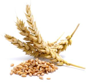 wheat-ears-and-wheat-kernels
